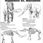 Illustrating the difference between Mammoths and Mastodons.
