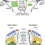 A reflexology chart.